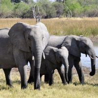 Discover the Real Africa on Safari
